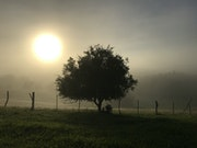 Misty Sunrise In The Countryside.