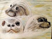Seals'family.