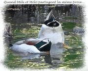 Quand Méli & Mélo se partagent la même pitance.