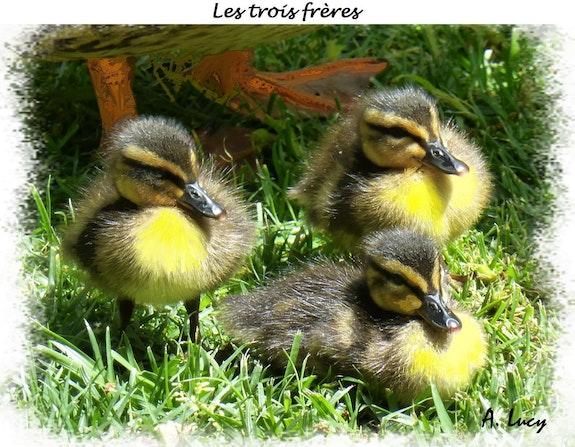 Les trois frères. Anne-Lucie Tarrie Altarrié