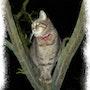 La nuit, tous les chats sont gris !. Altarrié