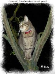 La nuit, tous les chats sont gris !.