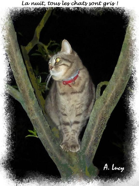 La nuit, tous les chats sont gris !. Anne-Lucie Tarrie Altarrié