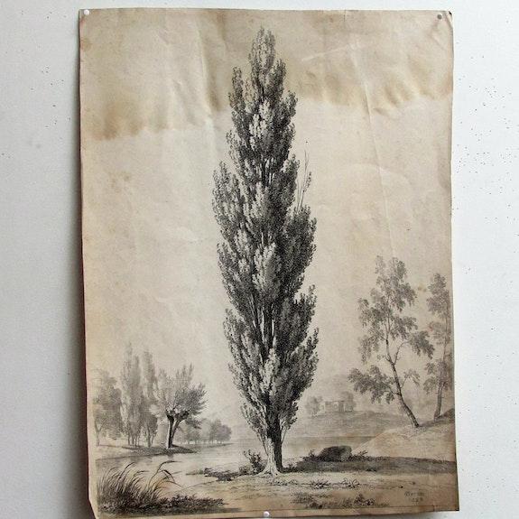 Bertin : Arbres. Bertin. 1829. Historien d'art, Archéologue; Chercheur Free-L.