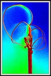 «Fusta cinta ferro». Joan Pascuti
