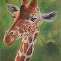 Girafe. Catherine Lccat