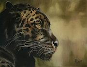 Le jaguar melanique.