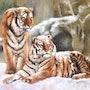 Tigres dans la neige. Résy