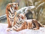 Tigres dans la neige.