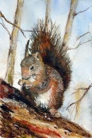 Écureuil.