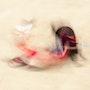 Danse avec la mort - dm37c. Thierry Volpi