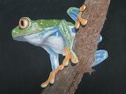 La grenouille Arboricole. Michel. Gouyet