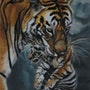 Le tigreau. Catherine Lccat