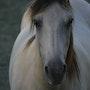Le beau cheval dans la nature. Mite02