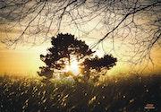 Coeur doré de l'arbre de vie.
