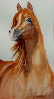 Aquarelle le cheval Egyptien. Yokozaza